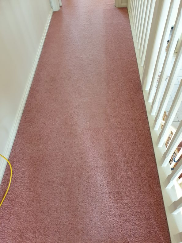 Redgum removes Pet hair from your carpets 1